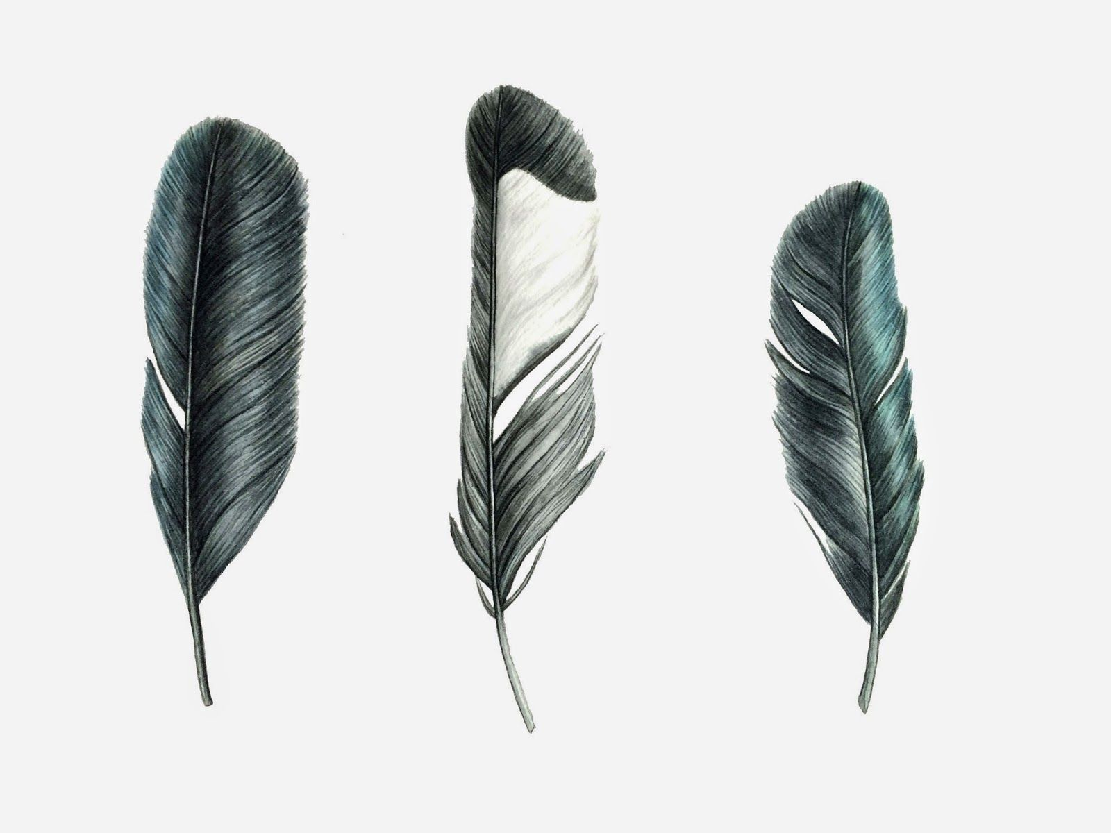Bird Feather Png What Kind Of Bird Feather Magpie Tattoo Feather Painting Feather Art