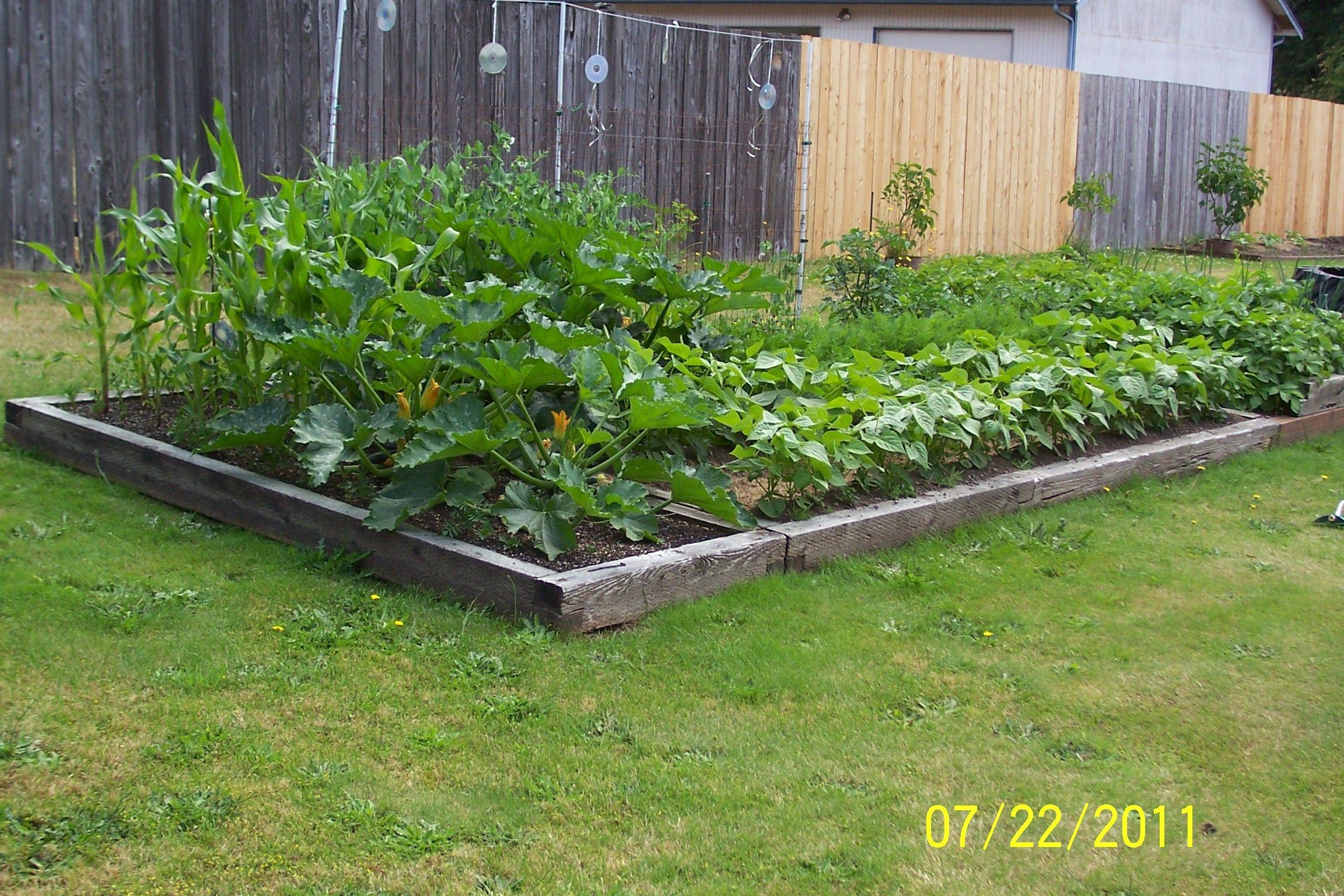 Our veggie garden 2011
