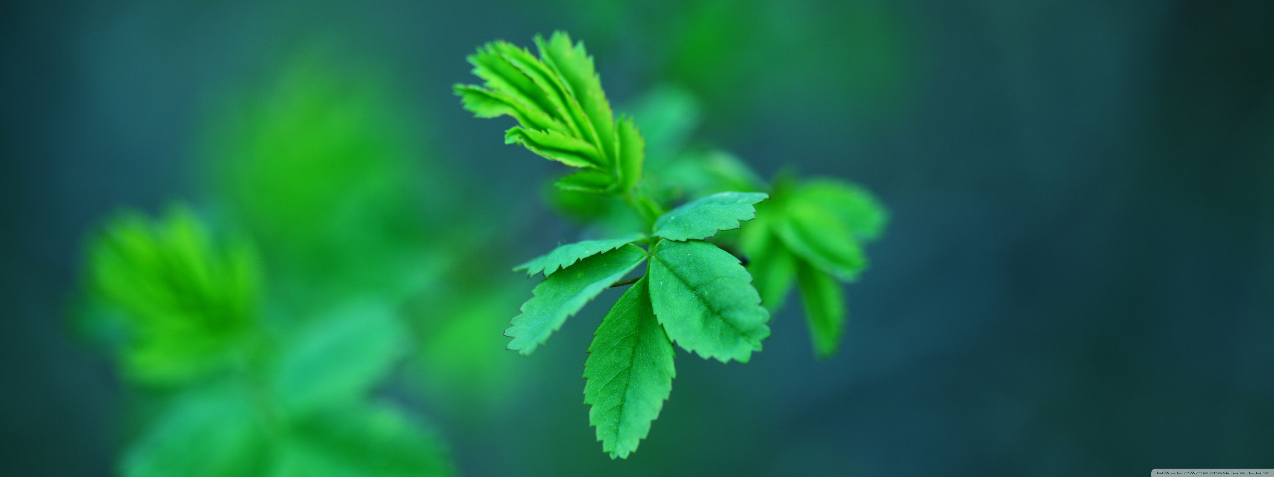 Green Spring Leaves HD desktop wallpaper High Definition
