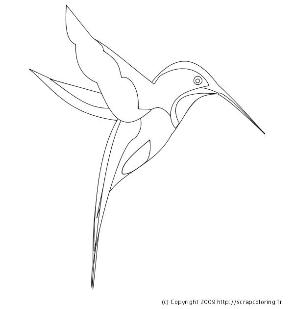 Coloriage colibri dessin au trait oiseaux dessin oiseau oiseau mouche oiseaux colorier - Oiseau mouche dessin ...