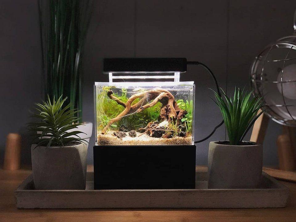 Mini Complete Tank Mini Aquarium Scaped By Thecinescaper Aquascape Mini Aquarium Aquascape Aquarium