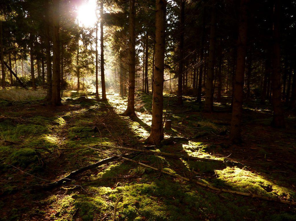 10+ Forest light information