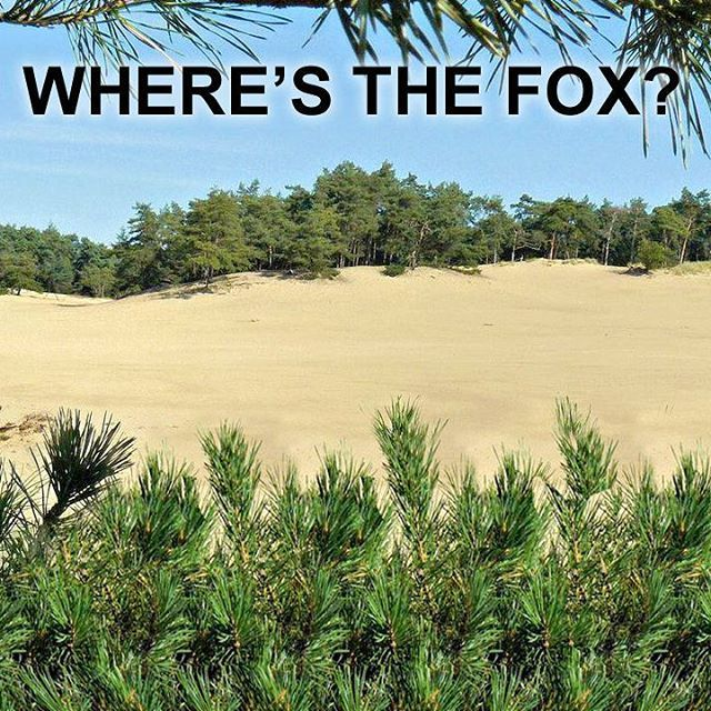 Where Is The Fox 3d Stereogram Autostereogram Hidden3d Opticalillusion Illusion Pictures Optical Illusions Pictures Magic Eye Pictures