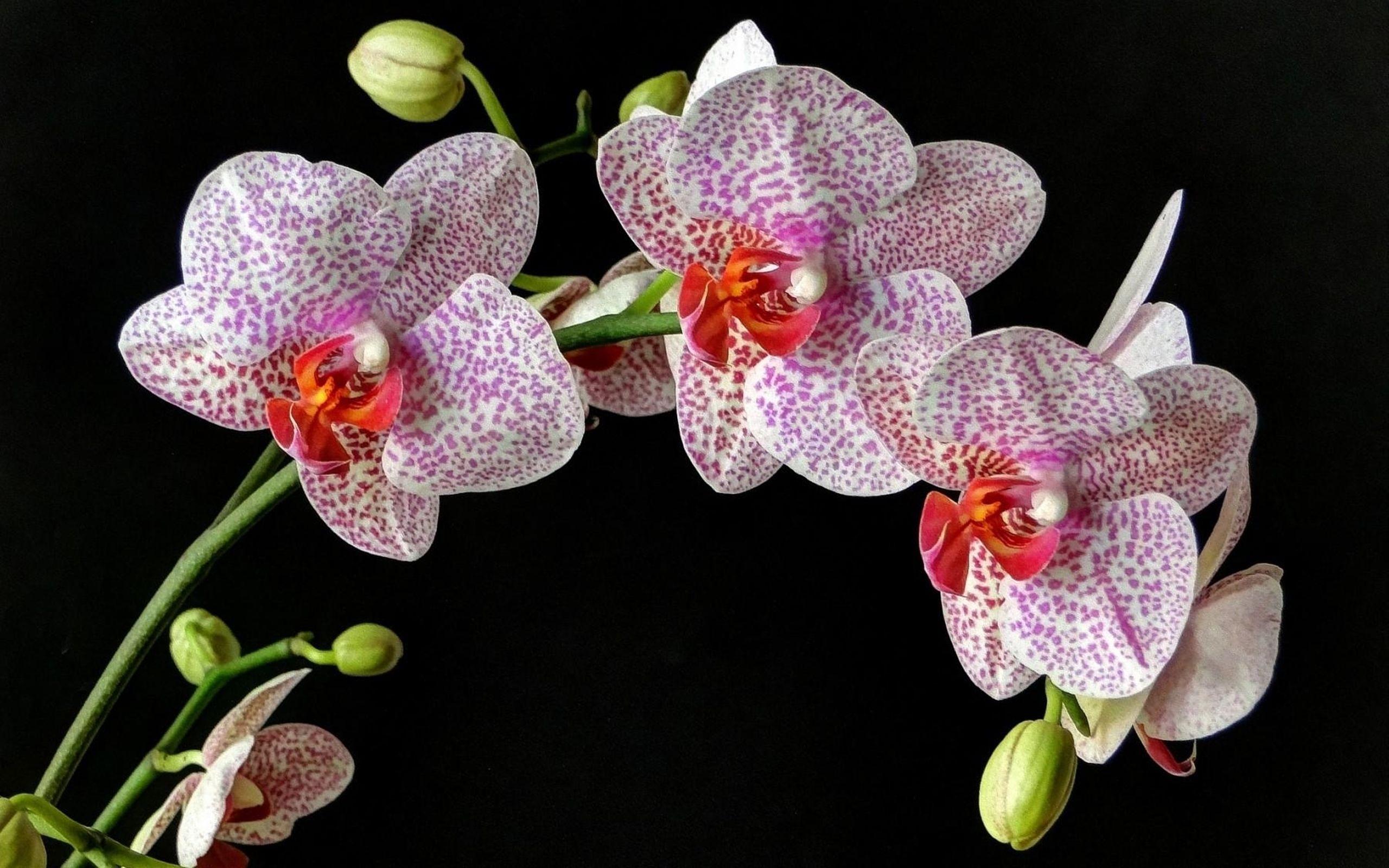 G flowersblack pinterest flowers