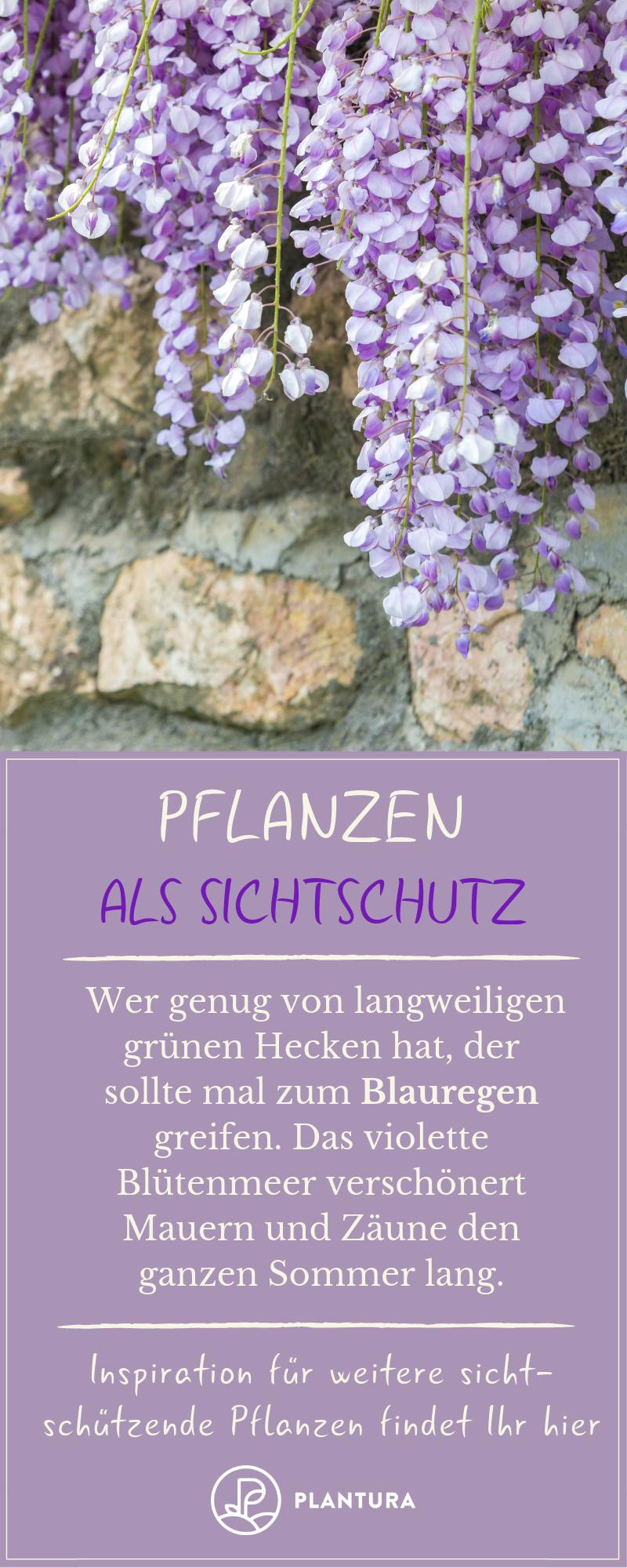 Pflanzen Als Sichtschutz Unsere Top 15 Fur Garten Balkon