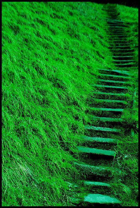 Green Way by NoNicknameNeeded ~ Emerald City Anyone? #overgrownaesthetic