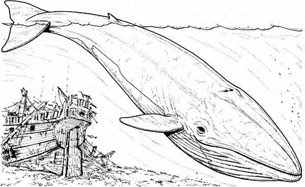 Whale Blue Whale And An Old Sinking Galeon Coloring Page Whale Coloring Pages Animal Coloring Pages Monster Truck Coloring Pages
