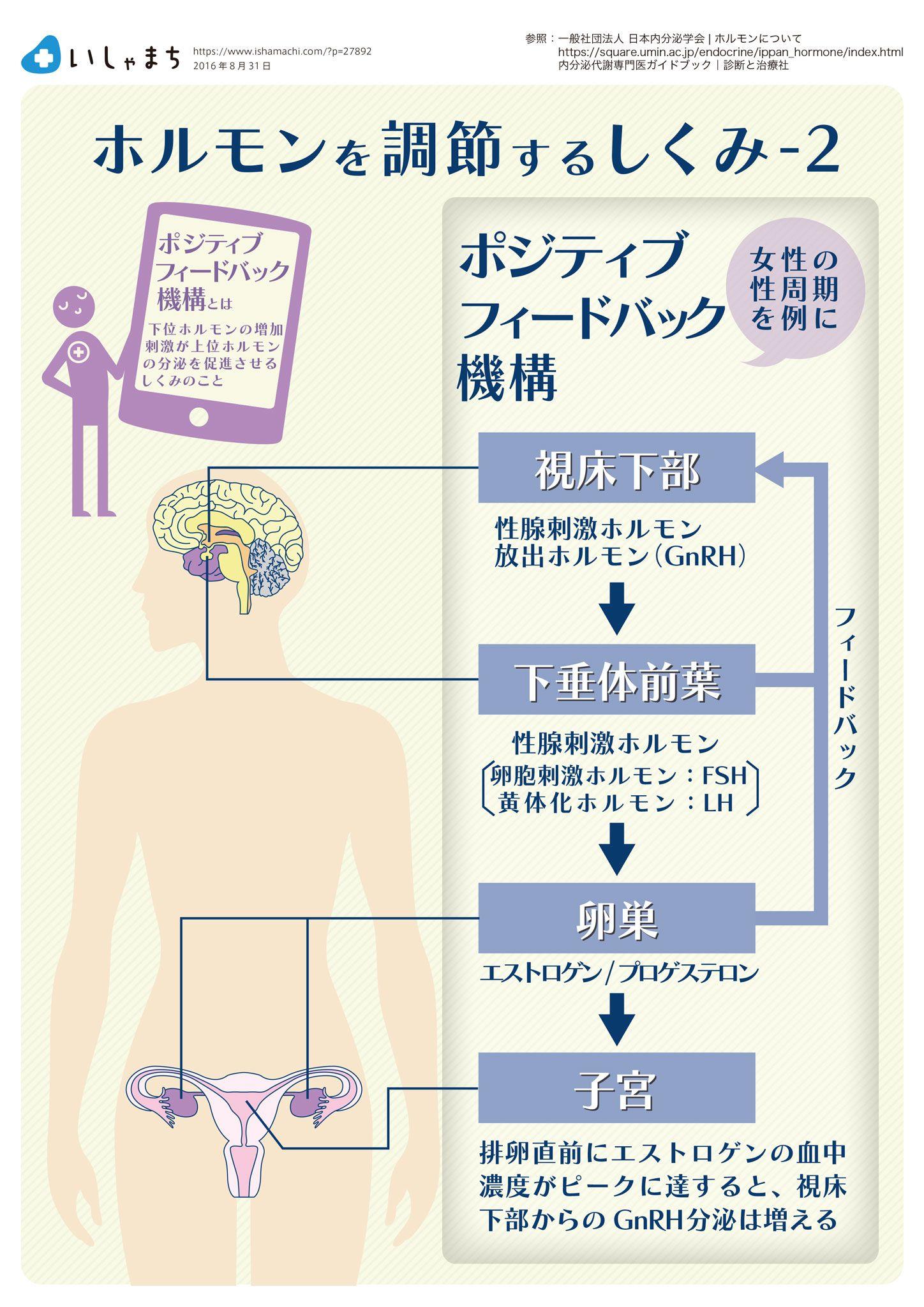 ホルモンを調節するしくみ ポジティブフィールドバック Infographics ストレス対策 肩こり 筋肉 ホルモン