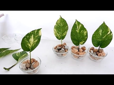 Creative Single Leaf Money Plants On Vertical Wood Panel For Bedroom Or Living Room Wall Decor Youtube Indoor Water Garden Plants House Plants Decor