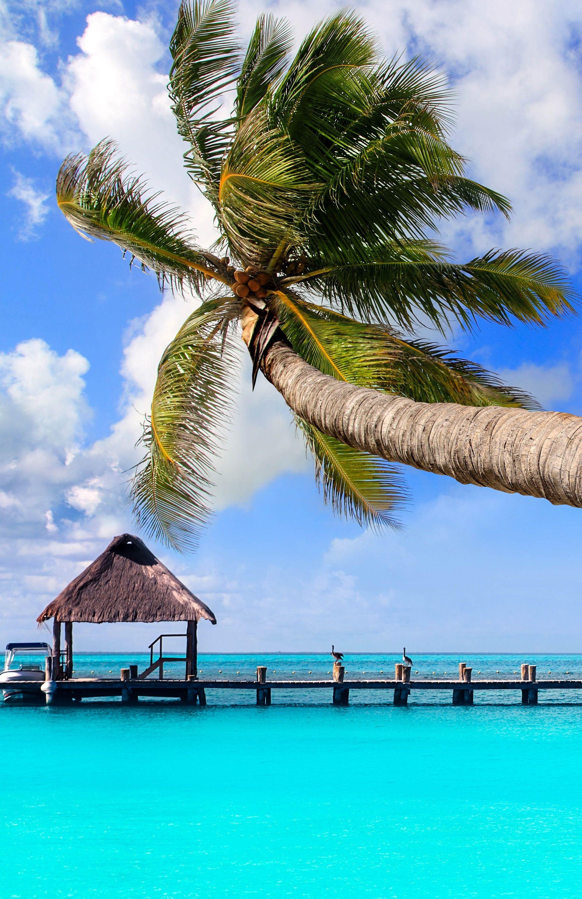 Urlaub In Mexiko Meine Cancun Tipps Fur Euch Urlaubsguru Mexiko Urlaub Mexiko Reisen Mexiko Rundreise