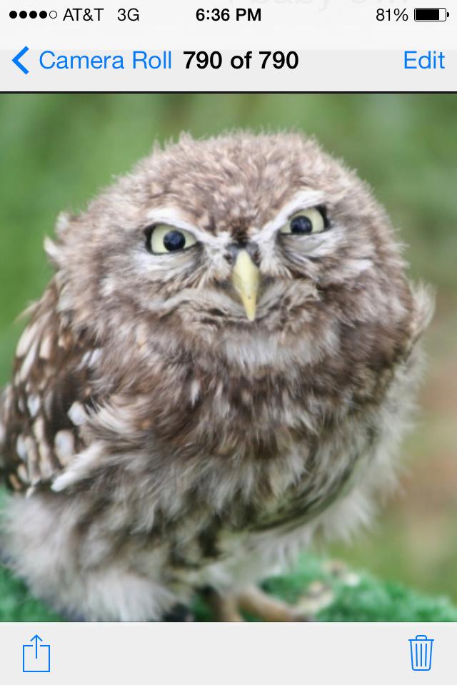 Coffee, I need coffee   Funny owls