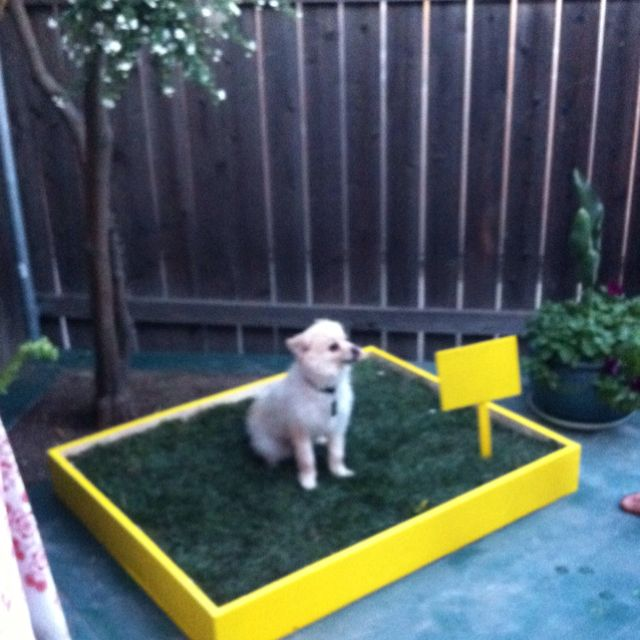 Grass box for apartment dogs. DIY love :)