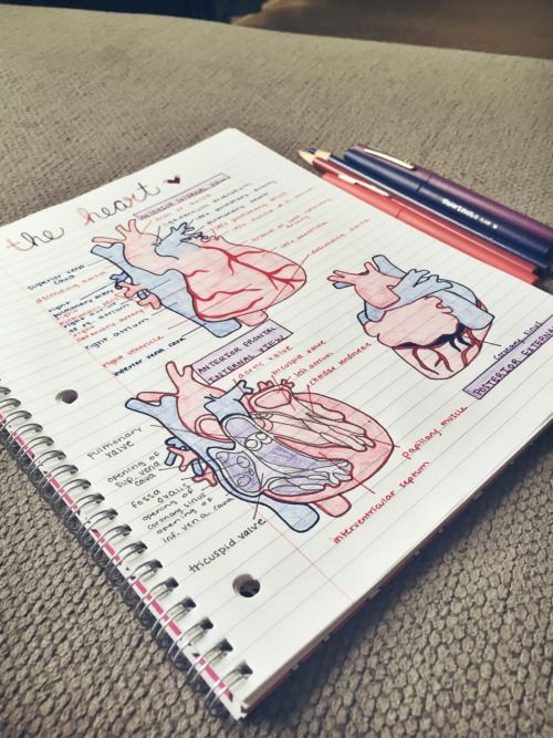 stemstudies: 3:56 pm // i ((heart)) anatomy | School | Pinterest ...