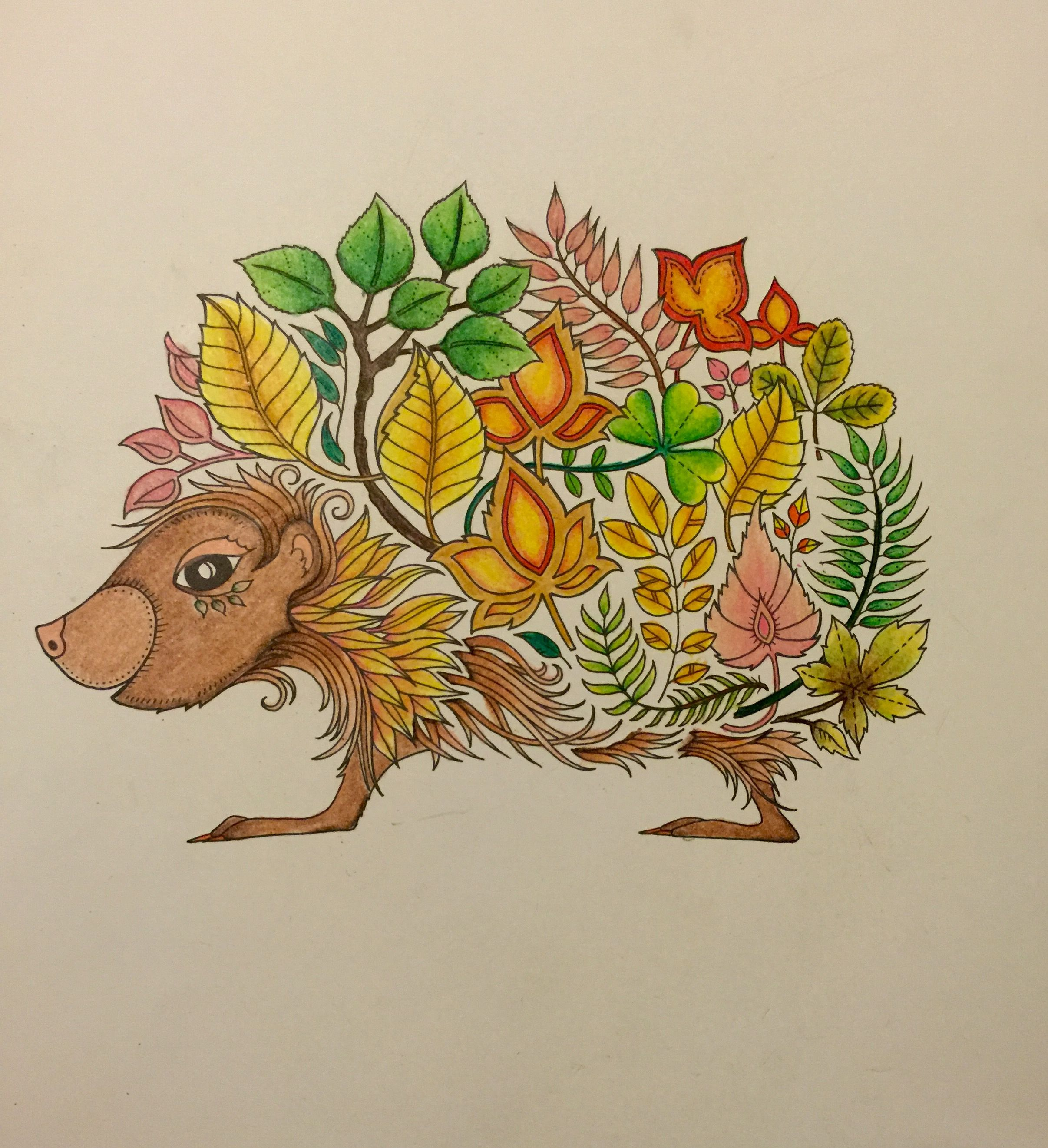 Hedgehog Enchanted Forest Coloring Book