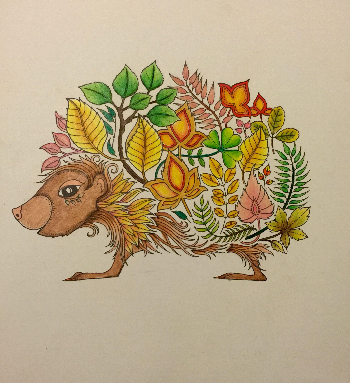 Hedgehog Enchanted Forest Coloring Book Enchanted Forest Coloring Book Forest Coloring Book Enchanted Forest Coloring