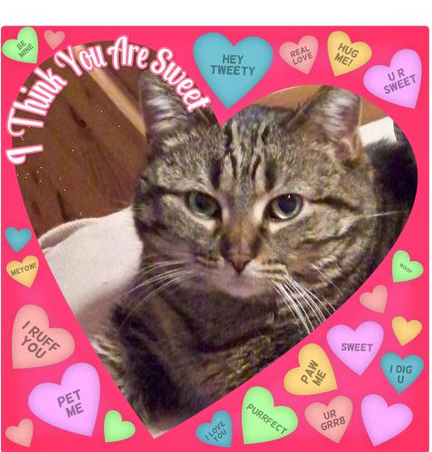 Big Purrs! Valentine Cat My animal, Autism activities
