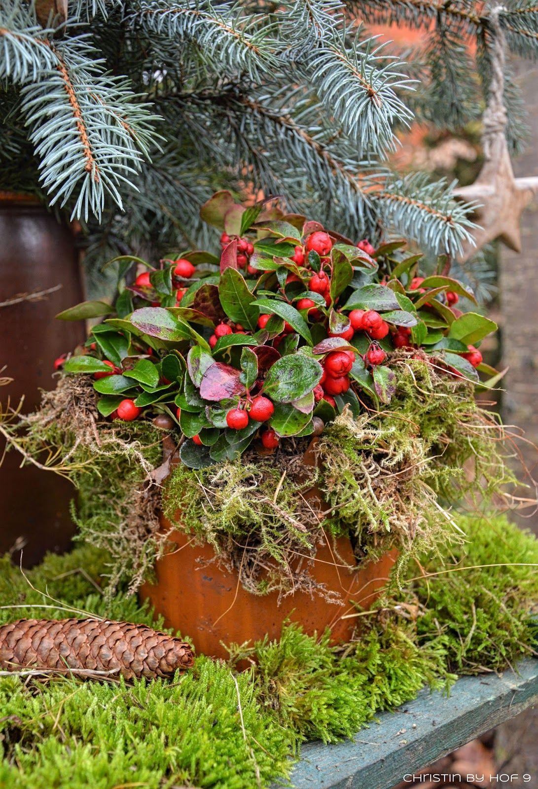 Quaste aus Kiefernadeln natrliche Gartendeko im Winter
