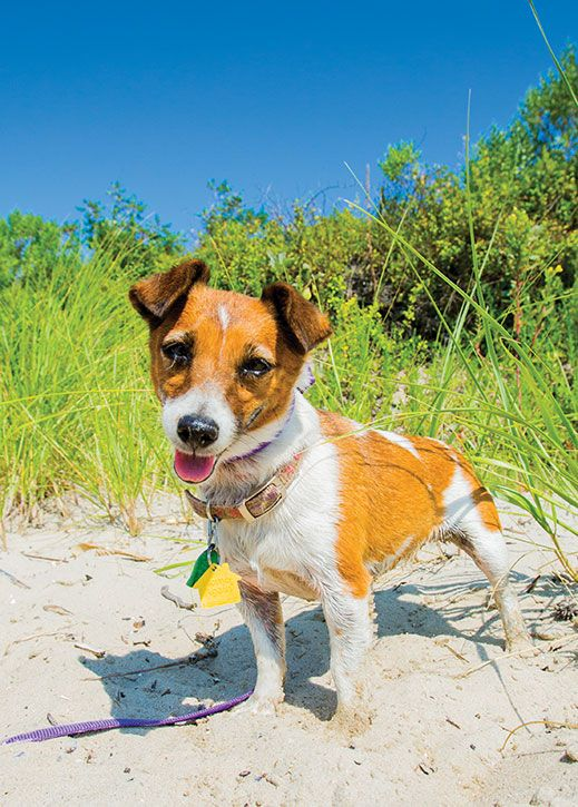 Don T Forget Fido 16 Dog Friendly Shore Destinations Dog Friendly Beach Dog Friends Dog Friendly Beach Vacations