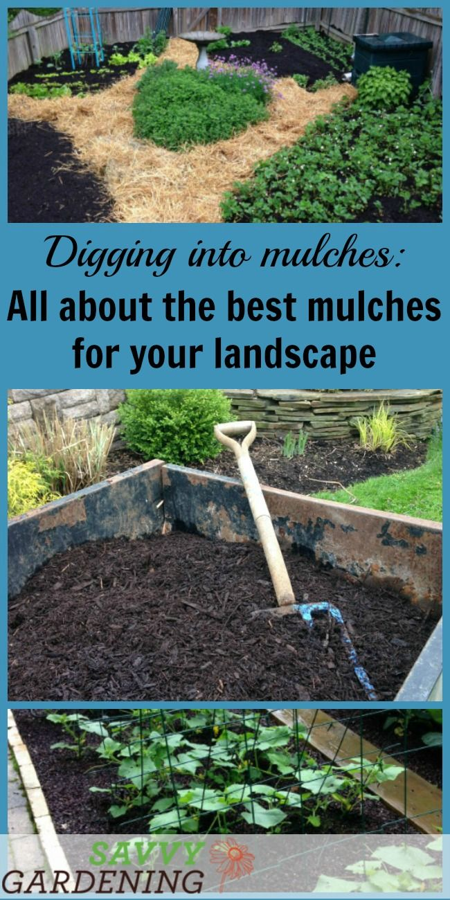 Digging Into Mulches Types Of Landscape Mulch For Your Garden Mulching Landscaping