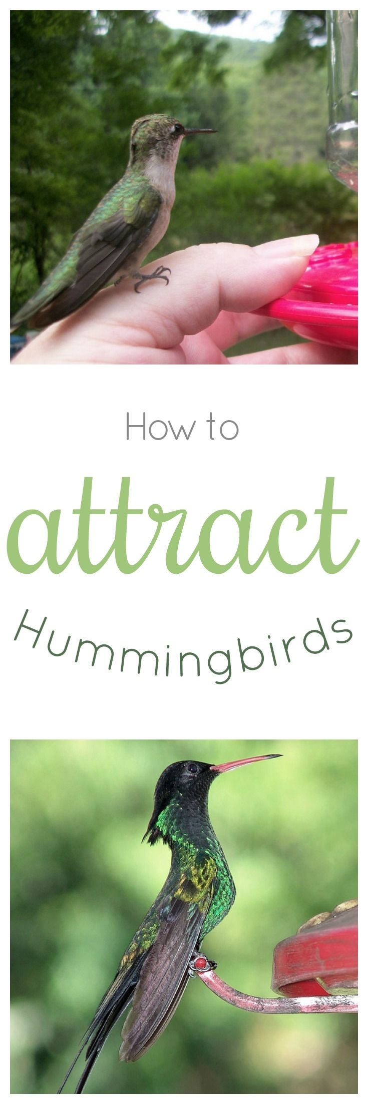 You'll attract dozens to your garden! | How to attract ...