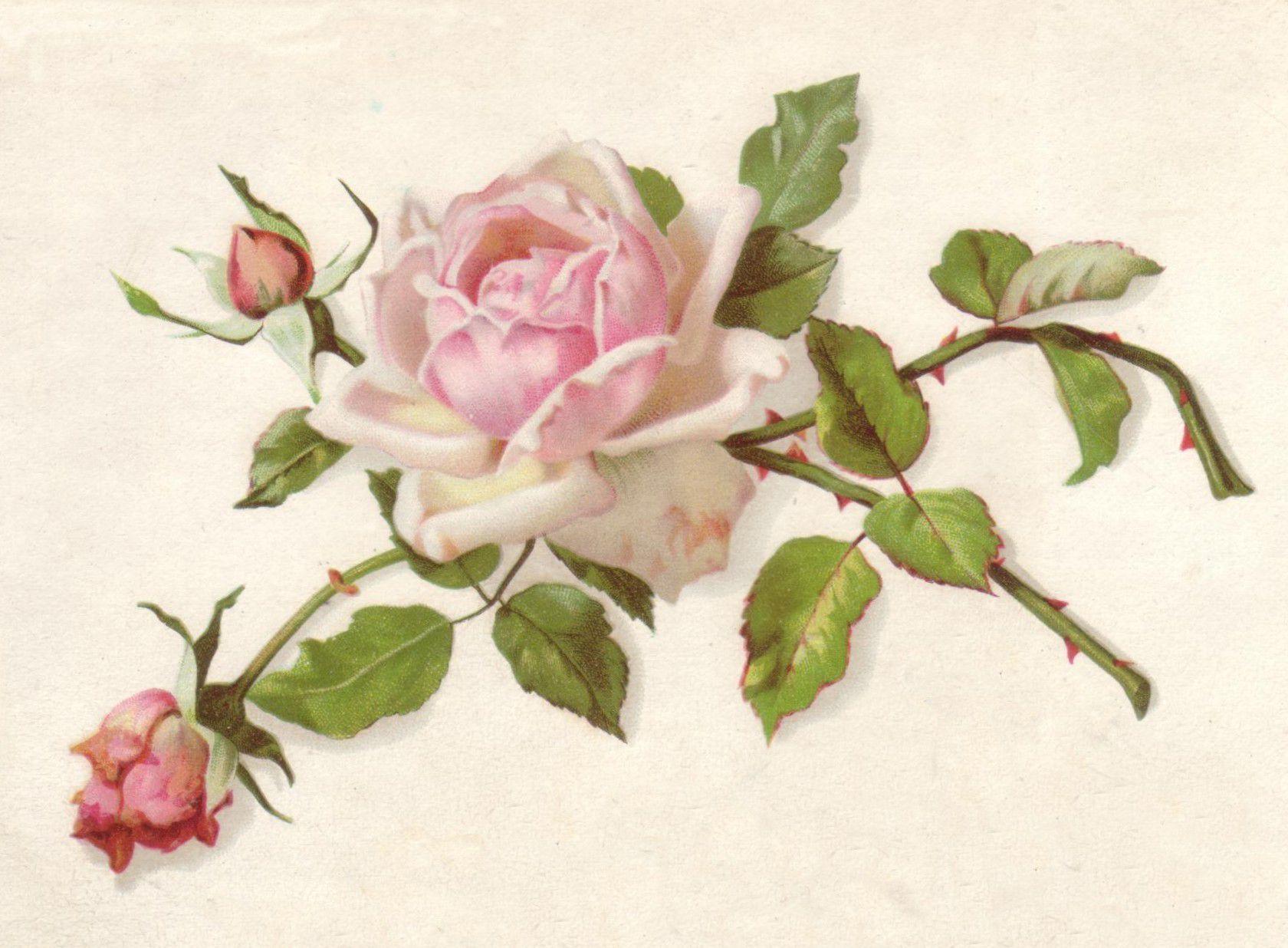 Ретро картинки розы, днем рождения женщине