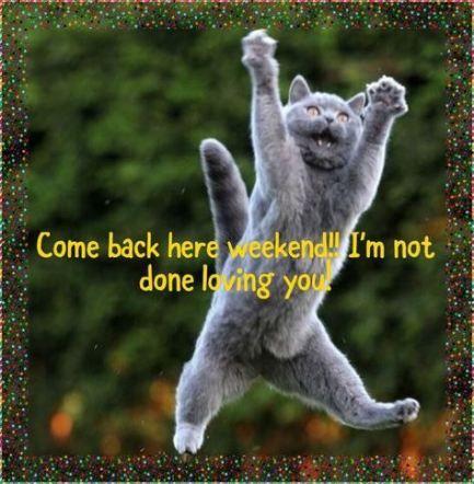 Super Humor Monday Morning Kitty 29 Ideas