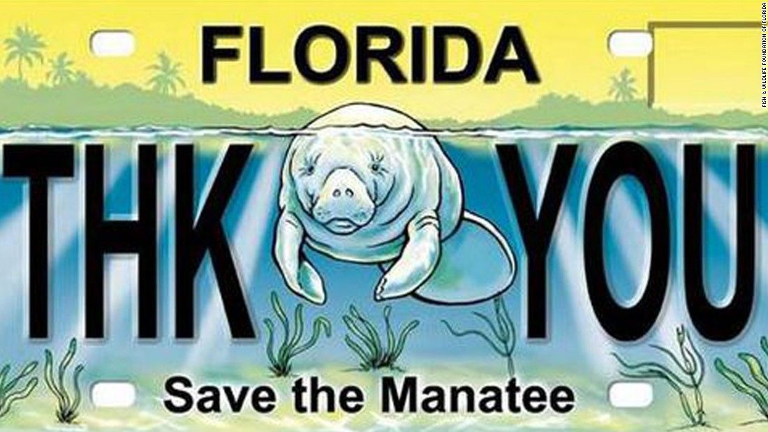 Saving the manatee Should they be listed as endangered