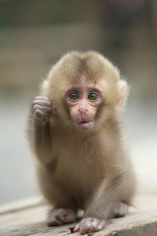 Sweet Baby By Masashi Mochida On 500px Jigokudani Monkey Park Japan Cute Animals Animals Beautiful Animals