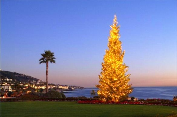 Montage Resort Christmas Tree South Laguna Beach