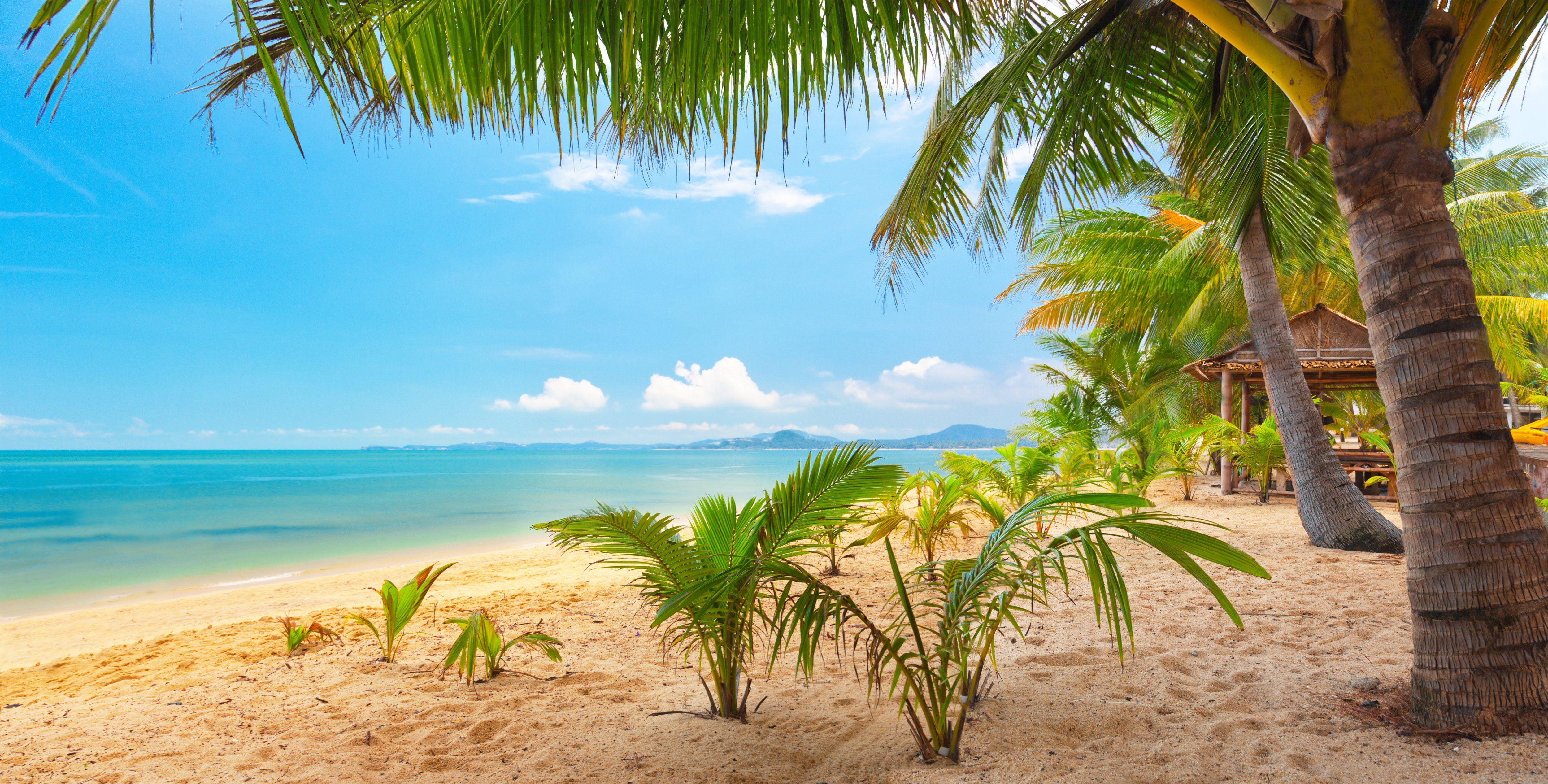 Beautiful Landscape Nature Palm Sand Sea Sky Trees Tropical 4k Wallpaper Hdwallpaper Des Beach Wallpaper Hd Nature Wallpapers New Nature Wallpaper Tropical island beach palm sea sand