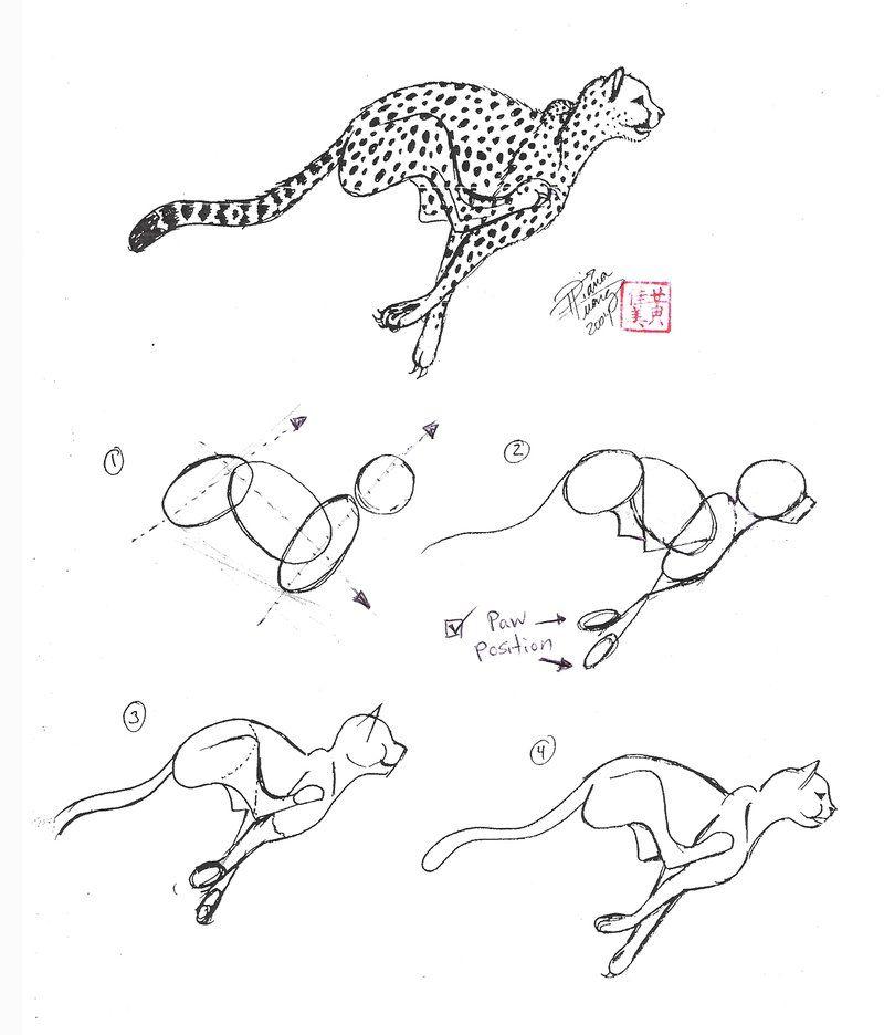 Draw A Cheetah By Diana Huang On Deviantart Animal Drawings Cheetah Drawing Drawings