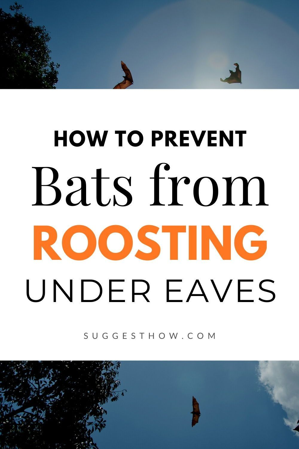 Bats are mammals that tend to live on any narrow area that