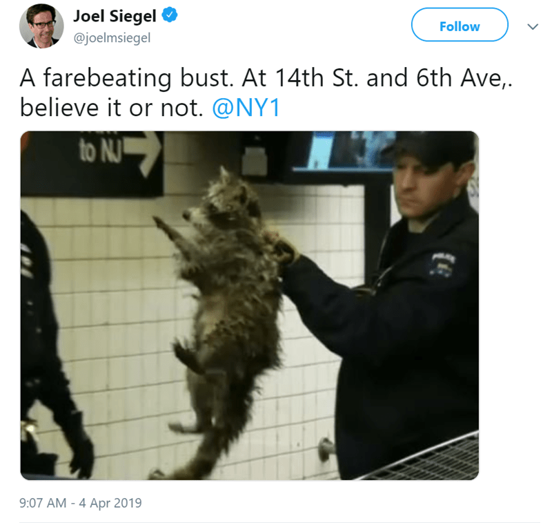 NYC Raccoon Gets Busted After Trying To Ride The Subway