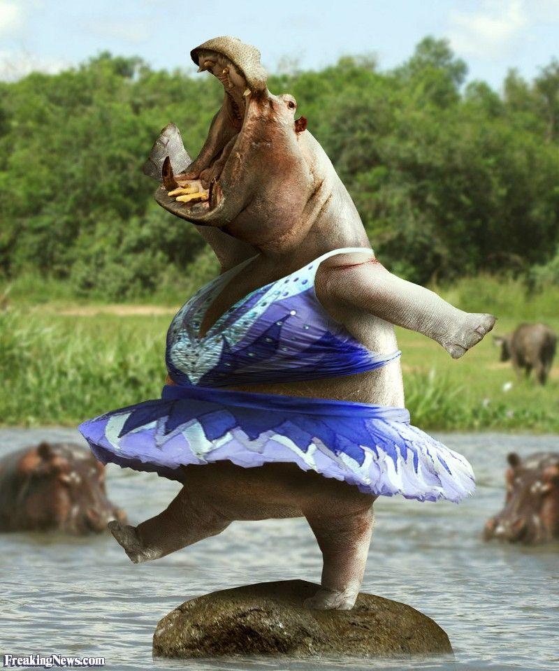 Картинка танцует смешно