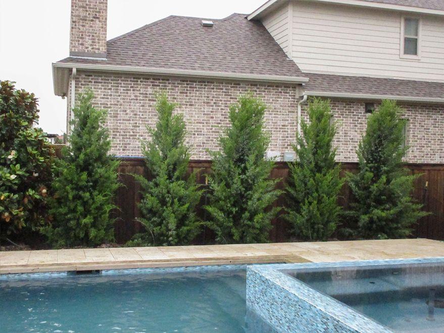Eastern Red Cedar Brodie Backyard Pool Landscaping Pool