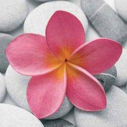 Image pour tableau 3D - Format 30x30 cm DM337672 FLEUR ROSE
