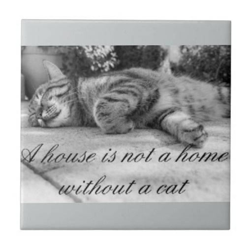 A House Is Not A Home Without A Cat Tile Ceramic Tile Zazzle