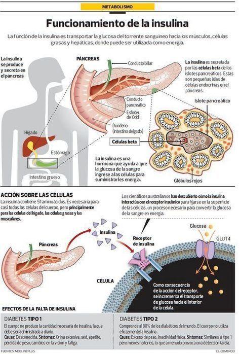 animación del metabolismo de aminoácidos de diabetes tipo 1