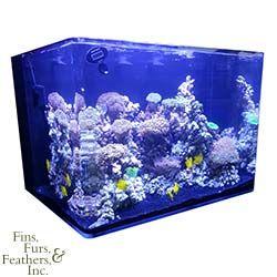 Jbj Nano Cube 45 Gallon Rl Rimless Biotope Aquarium Marine Depot Aquarium Gallon Biotope Aquarium