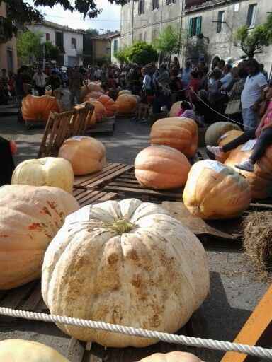 Weighing in the #pumpkin in Petricci #maremma #tuscany everu year delicious pumpkin dishes #food #wine
