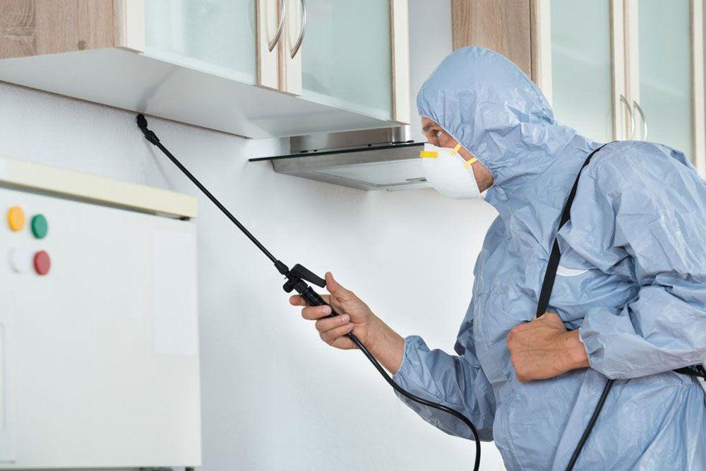Knowhubb Com Pest Management Pest Control Services Bed Bugs Treatment