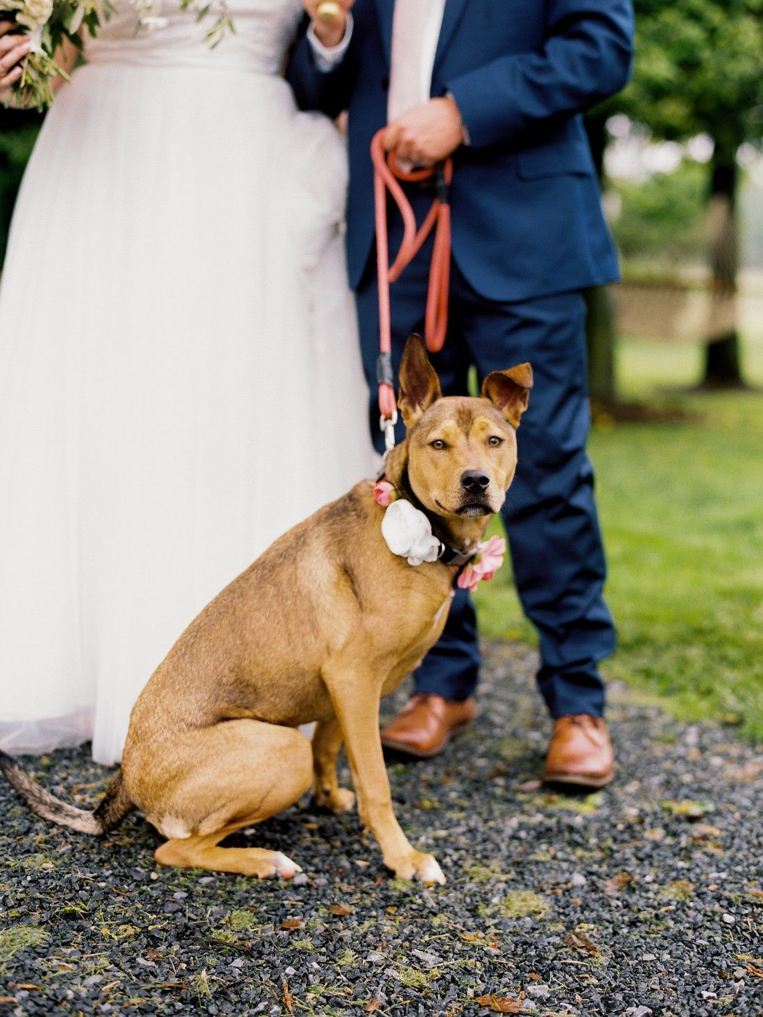 Gorgeous Elegant pet collars forecast to wear in on every day in 2019