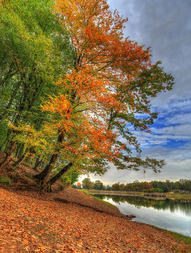 Image%20result%20for%20beautiful%20autumn%20leaf%20falling%20pinterest