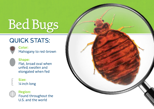 how to know if bed bugs