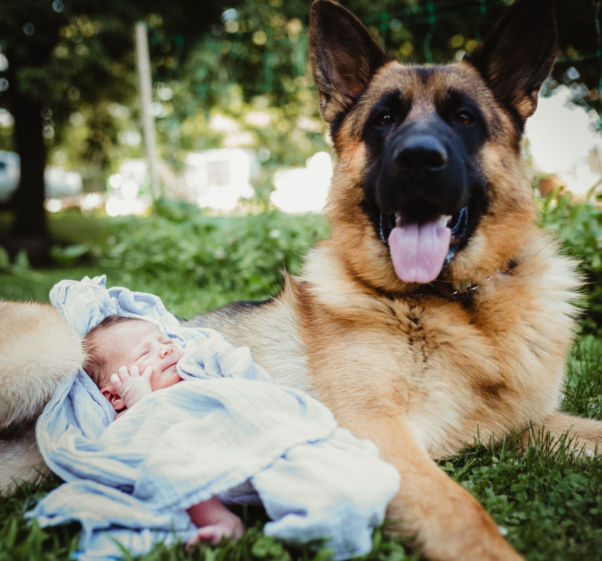 German Shepherd Dog And Newborn German Shepherd Pictures Newborn Photos Boy Baby Announcement Photos