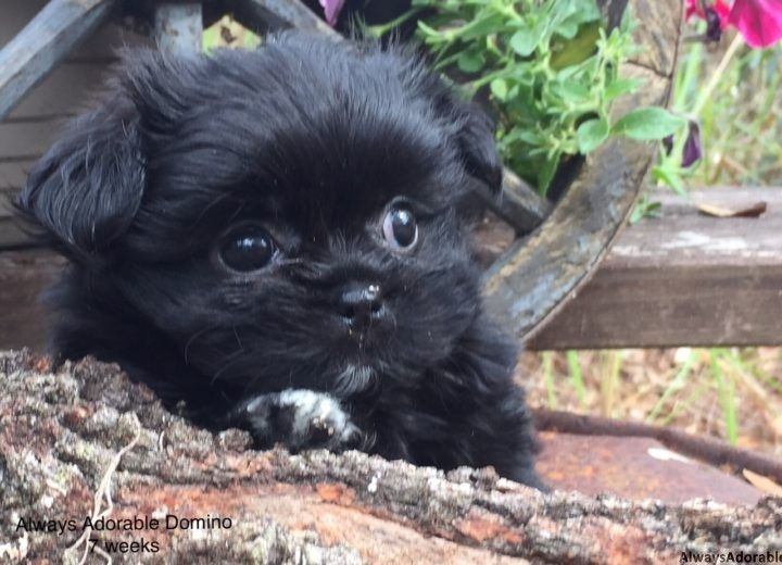 August 2016 puppies from Puppies, Puppy nursery, Cute