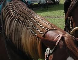 mane and tail braiding - Google Search | Horse mane braids ...