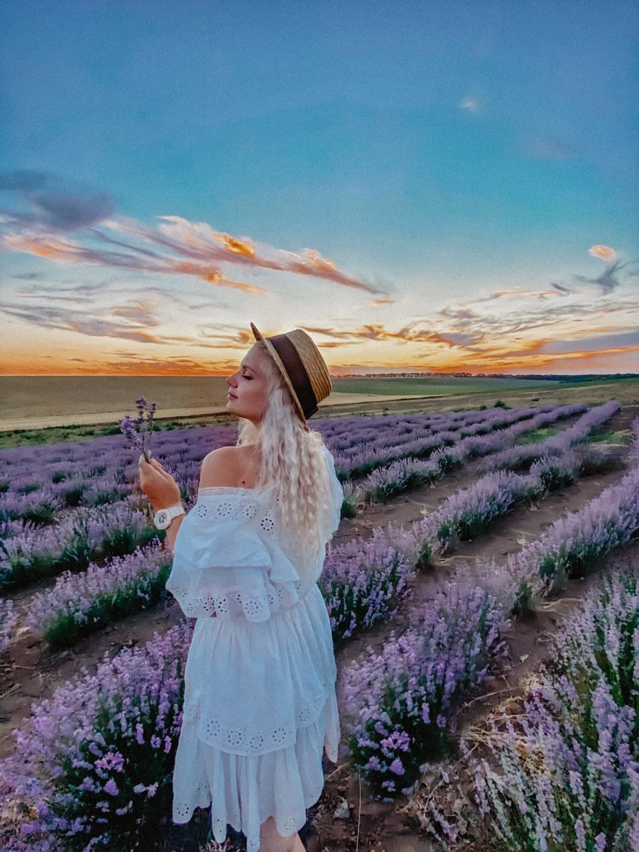 Traveling lavender province France in 2020 Odessa