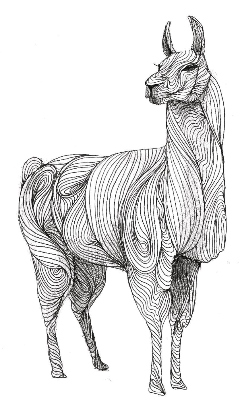 lama drama malvorlage  coloring and malvorlagan