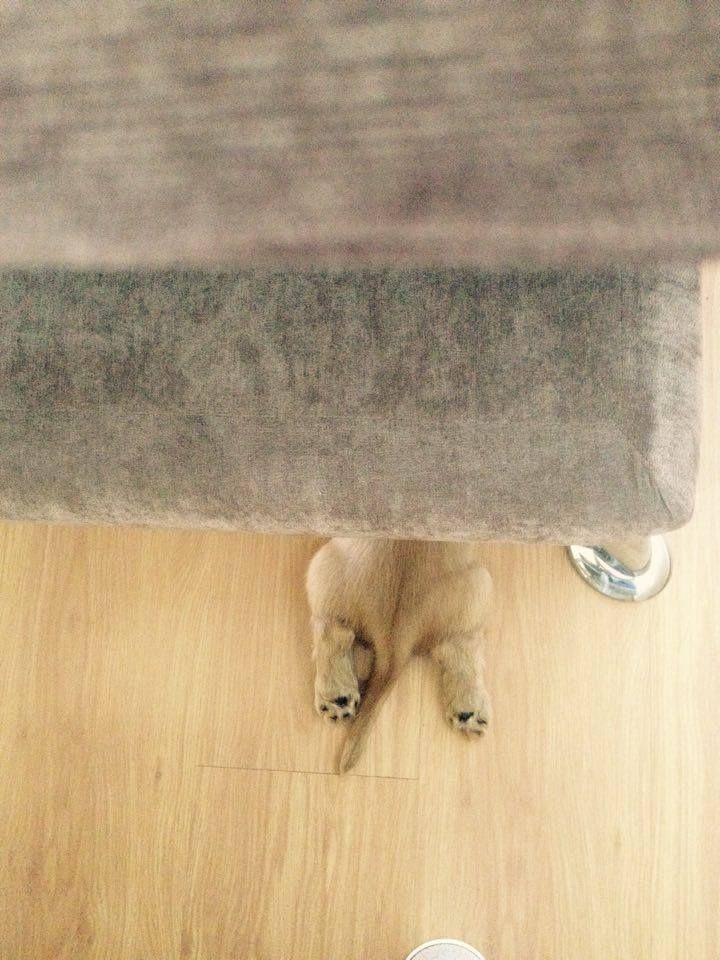 Lutero <3 #dog #filhotes #cocker #pet #petlovers #doglovers #patinhas